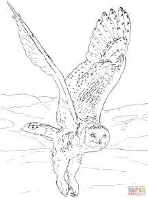 Snowy Owl Coloring Pages snowy owl coloring page free printable coloring pages