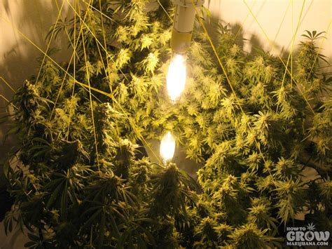 Led Cabinet Lights Vertical Hydroponic Systems