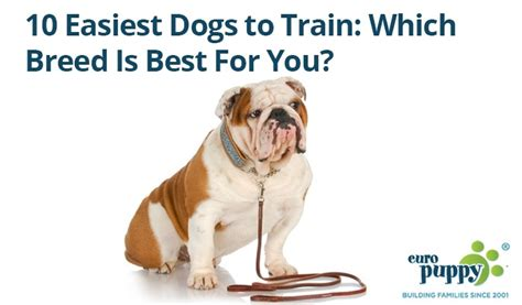easy to house train dog breeds 10 easiest dogs to train which breed is best for you europuppy blog
