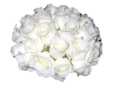 imagenes de rosas blancas para facebook imgenes de rosas fotos de rosas rosas rojas blancas y