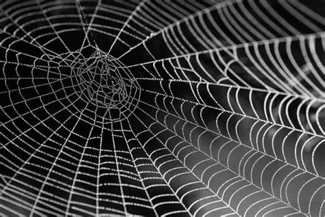 web images 250 engaging spider web photos 183 pexels 183 free stock photos