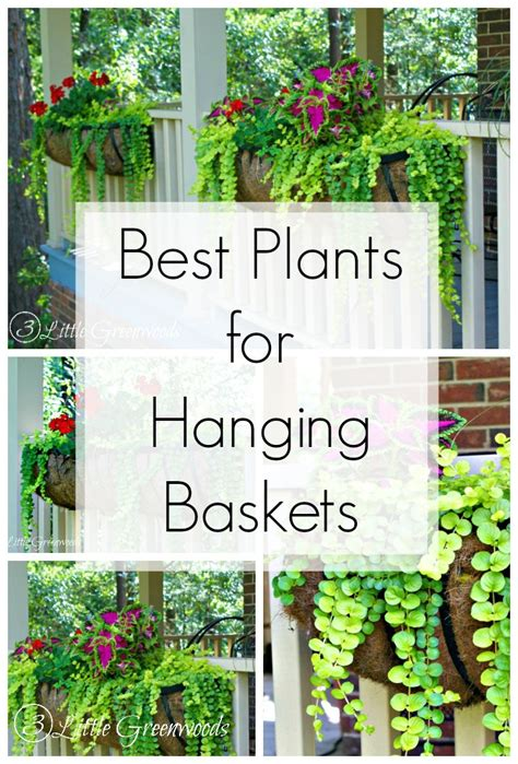 Best Plants For Hanging Planters by The Best Plants For Hanging Baskets On Front Porches