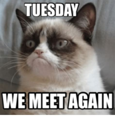 meme tuesday grumpy cat tuesday www pixshark images galleries