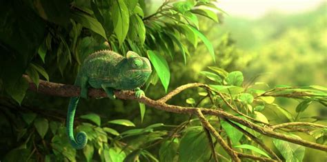 the wonderful world of tiny creatures learning nature volume 1 books our wonderful nature the common chameleon lumatic