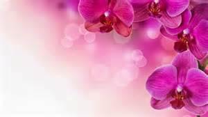 imagenes de rosas fondo imagenes zt descarga fondos hd fondo de pantalla flores