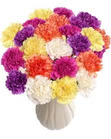 carnation color 100 carnation explosion