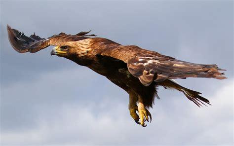 imagenes de jordan volando 193 guila volando hd fondoswiki com