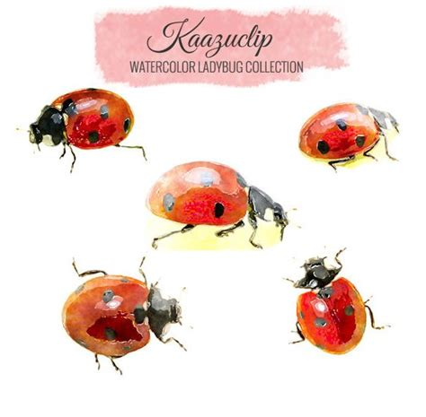 watercolor tattoos ladybug 6088 best images about ladybugs on ladybug
