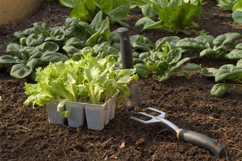 Que Peut On Planter En Septembre by Que Planter Ou Semer En Automne