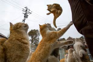Aoshima Cat Island | est100 一些攝影 some photos cats crowd the harbor clowder