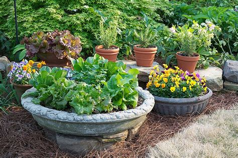 container gardening arizona five tips for container gardening success the daily