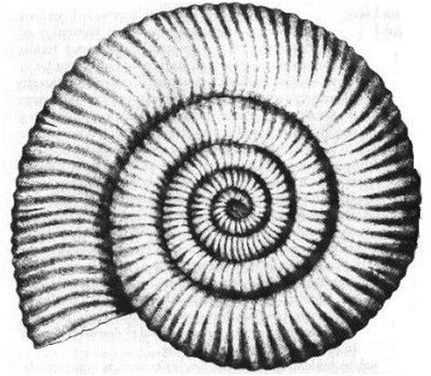 Tree Sticker Wall Decor ammonite fossil outline tattoo inspiration pinterest