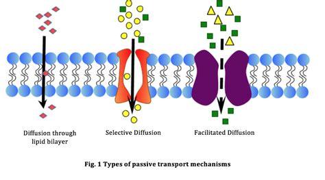 phospholipids   part  transport  cell