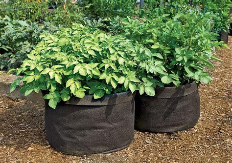 Grow Bag Gardening by Grow Bags Tomatoes Peppers Herbs And Potatoes The