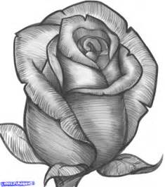Drawing Rose Picture Drawing Drawing Art Gallery