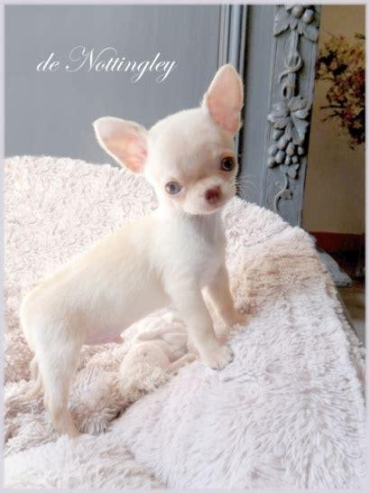 canapé pour chiens album photo de nos chiots de nottingley
