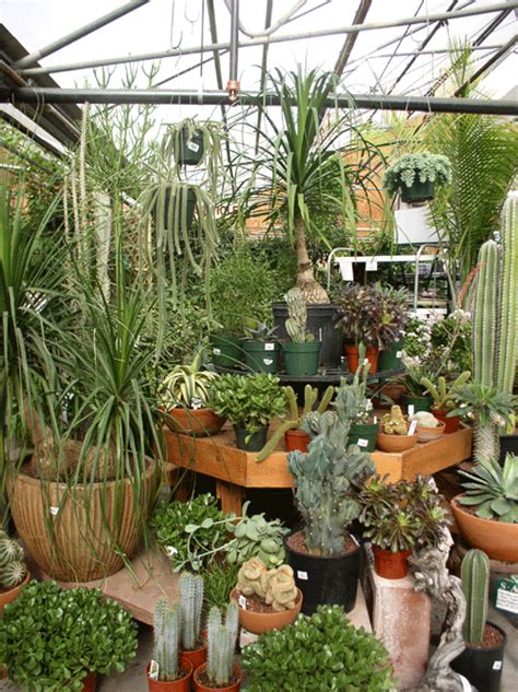 indoor plant display houseplants that clean the air celebrity image gallery