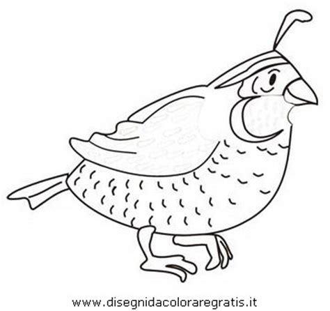 coloring page of quail quail coloring pages for preschool preschool and
