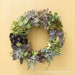how to make a living succulent wreath succulents and