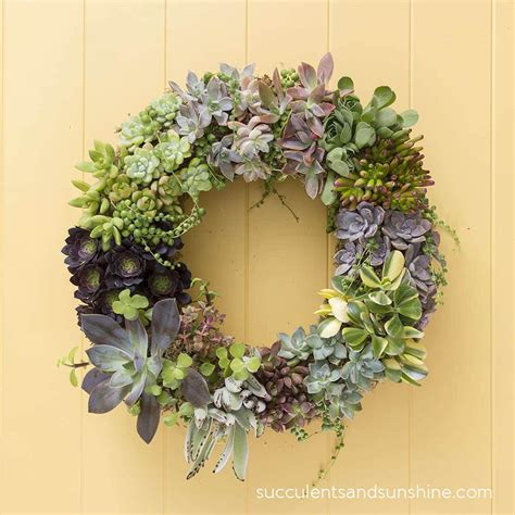 how to make a living succulent wreath succulents and sunshine