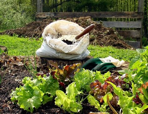 Best Type Of Manure For Vegetable Gardens - composting