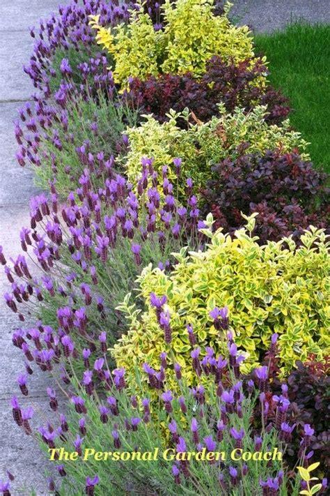 17 Best Images About Garden Border Ideas On Pinterest Lavender Garden Ideas