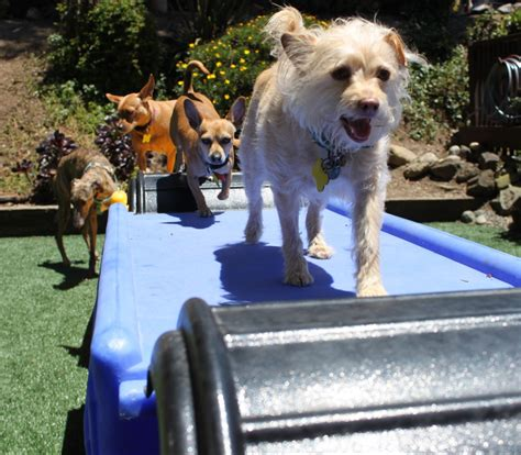 puppy daycare sf small daycare the of walking s f style