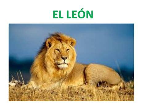 imagenes de animales leon el maravilloso mundo de los animales le 243 n y jirafa