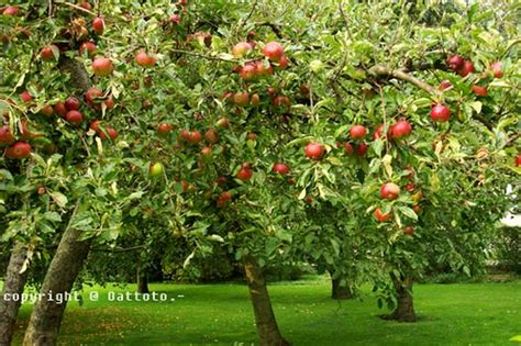 life is like a tree different types of apple trees