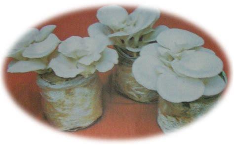 cinta ilmu panen  penanganan pasca panen jamur tiram