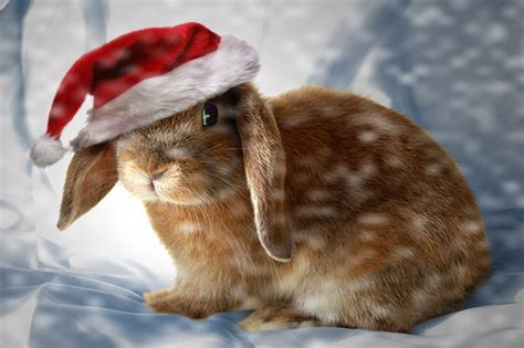 images of christmas rabbits christmas bunny by theworldiveknown on deviantart