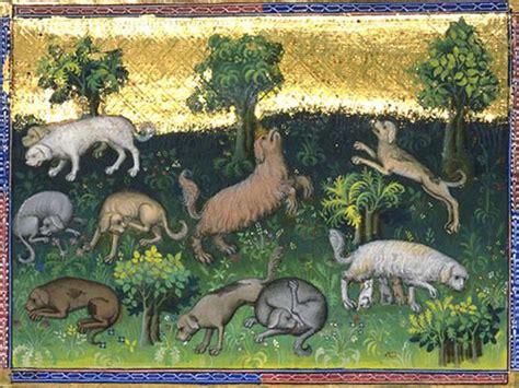 alimentazione di oggi l alimentazione dei cani dal medioevo ad oggi siua notizie