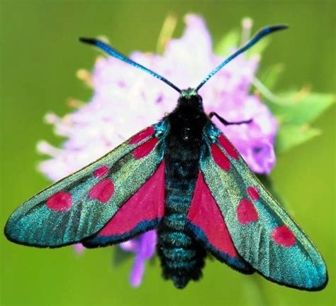 colorful moths 17 best images about moths beautiful on