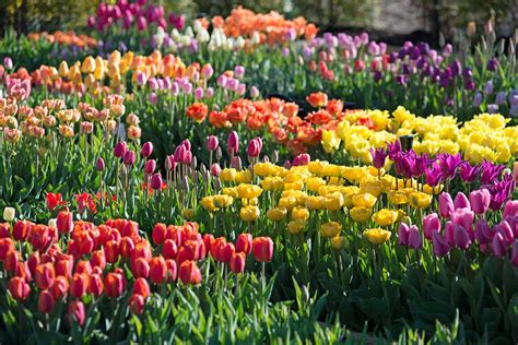 spring bulb garden longfield gardens