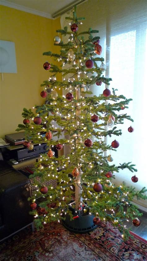 silver tip tree 25 best silver tip trees images on