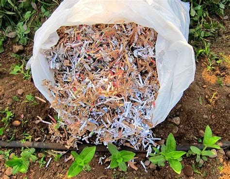 How To Make Paper Mulch - shredded paper as garden mulch clover farm