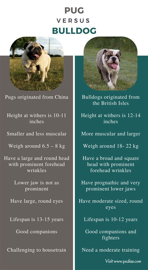 pug behaviour traits difference between pug and bulldog facts features characteristics behavior