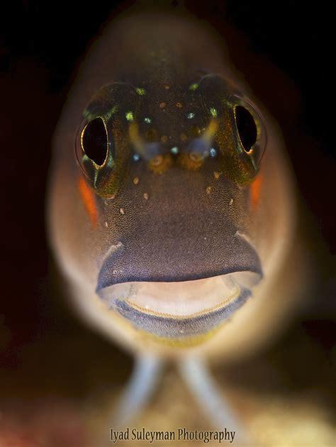 Choosing the best lens for DSLR underwater   Mozaik UW