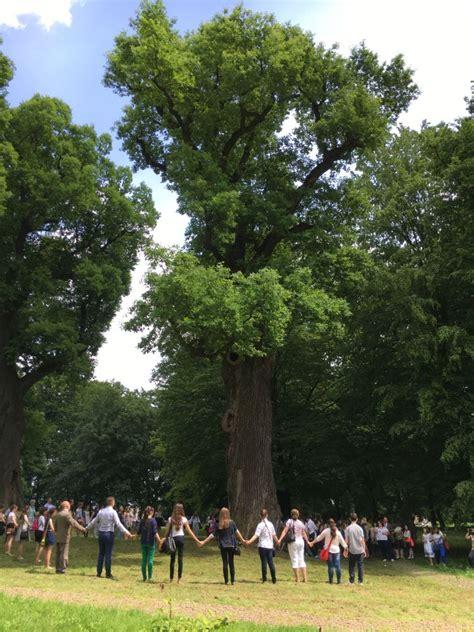 oaks  pines   history european tree   year