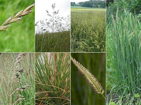 images  nature grasses  weeds