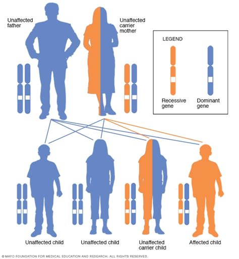 muscular dystrophy pattern of inheritance x linked recessive inheritance pattern with carrier mother
