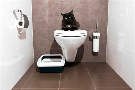 the loo bathroom how to train a cat to do 5 life changing things reader s