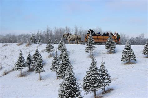 gallery of christmas tree farm michigan perfect homes