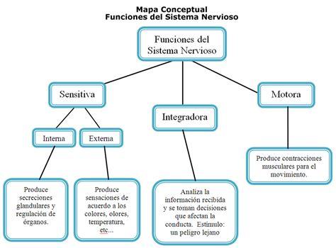 Mapa Conceptual Del Sistema Nervioso   esquema del mapa conceptual sistema nervioso pinterest