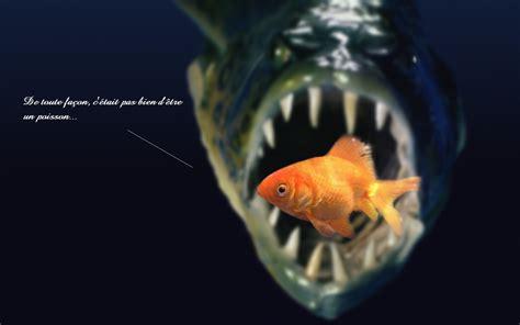 Je M 039 je m en fish wallpaper 1680x1050 178644 wallpaperup