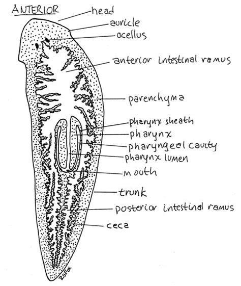 Sepatu Flames Endorgan Brown flatworms