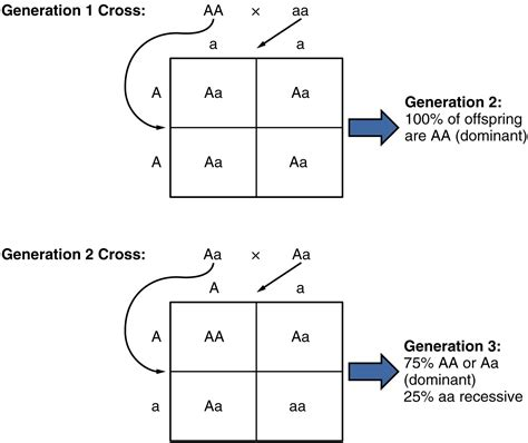 php template inheritance patterns of inheritance textbook chapter alyvea