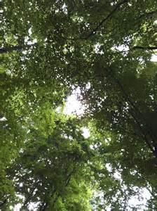 Tree Canopy Tree Canopy Everyday Epistle By Aimee Whetstine