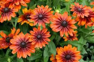 Garden Flower Types File Garden Of Flowers 5982172940 Jpg