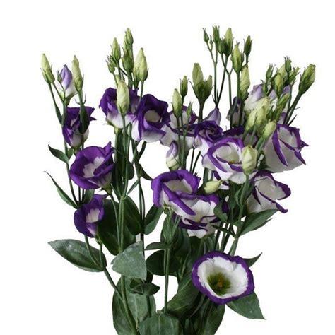 I Fiori Di Luglio fiori di luglio fiorista quali sono i fiori mese
